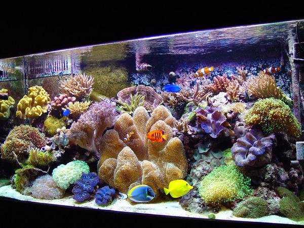 Reef-tank